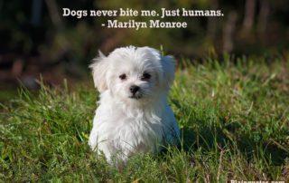 dogsNeverbite image