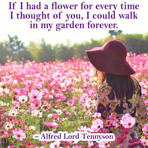 If I had a flower for ever time