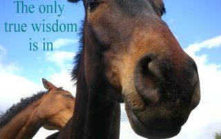 the only true wisdom