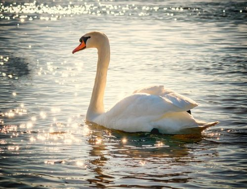 10 Reasons Why we Must Drink Water in the Mornings?