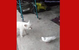 bird Dog image
