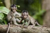 you look like a monkey image