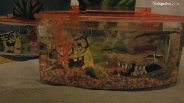 SpongeBob Squarepants tank